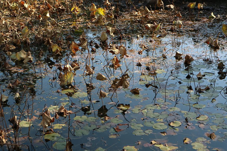 Nature, The Body Of Water, Leaf, Outdoors