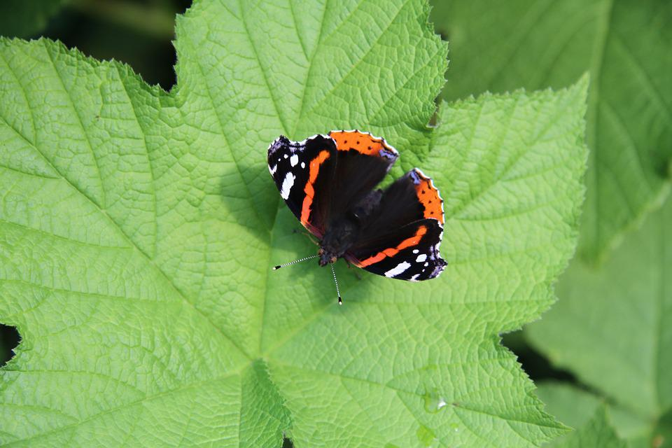 The Butterfly On The Leaf