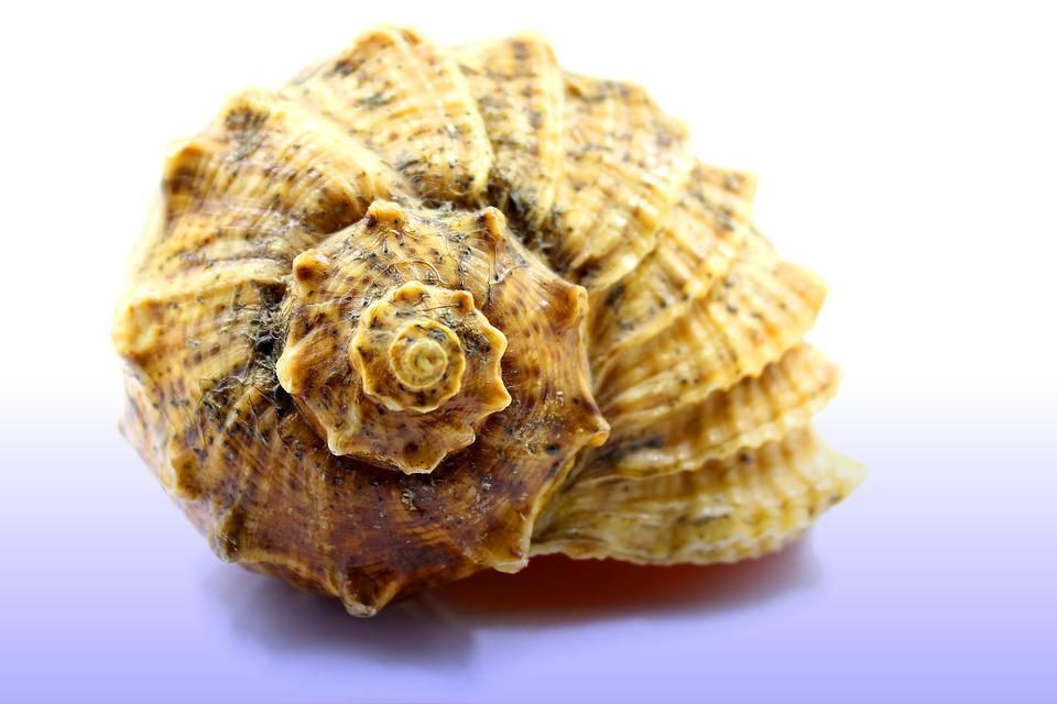 Seashell, Sea, The Clams