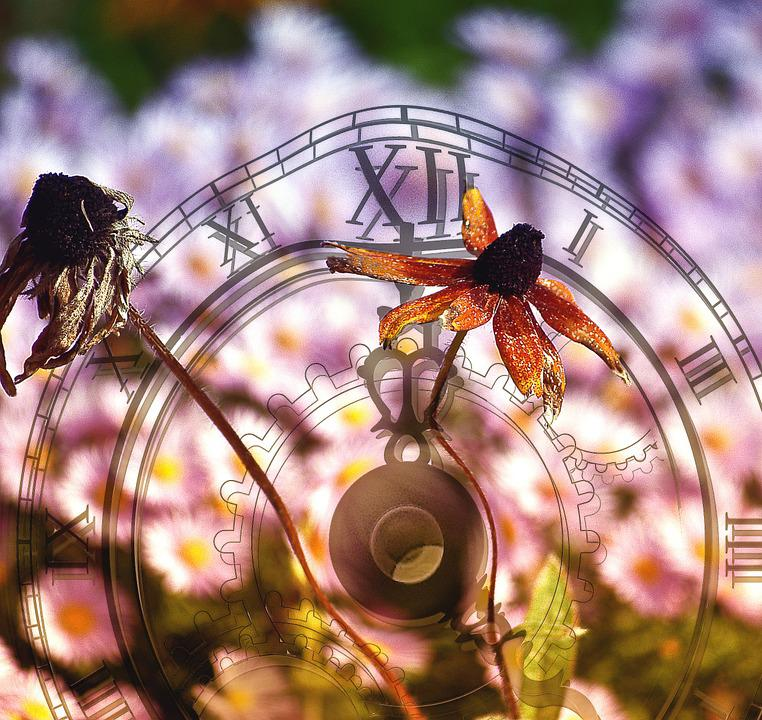 Flower, Time, Vanishing, The Cyclicality Of, Durability