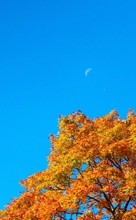 Autumn, Crown, Color, Moon, The Day, Landscape