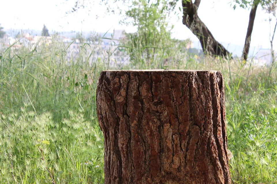 Stump, Tree Trunk, Emek Hazvaim, The Deers Valley
