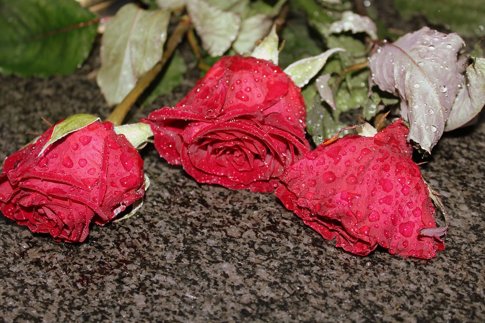 Roses, In The Rain, The Delicacy, Nature, Red Roses