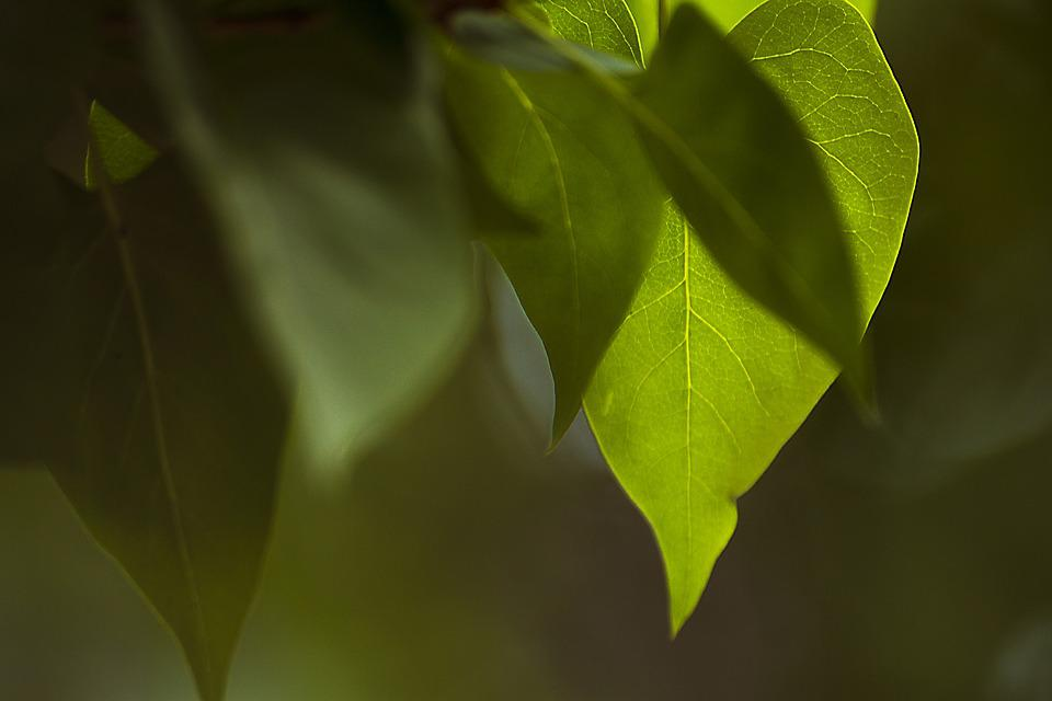 Leaf, Plant, Nature, The Environment, Tree, No One