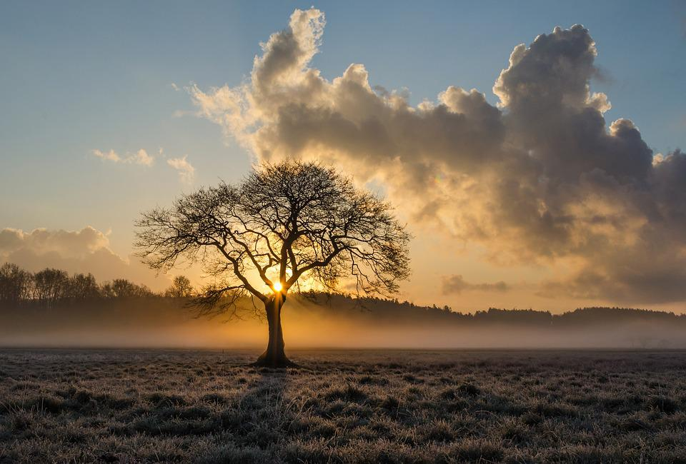 Lone Tree, Tree, Oak, Clouds, Landscape, The Fog