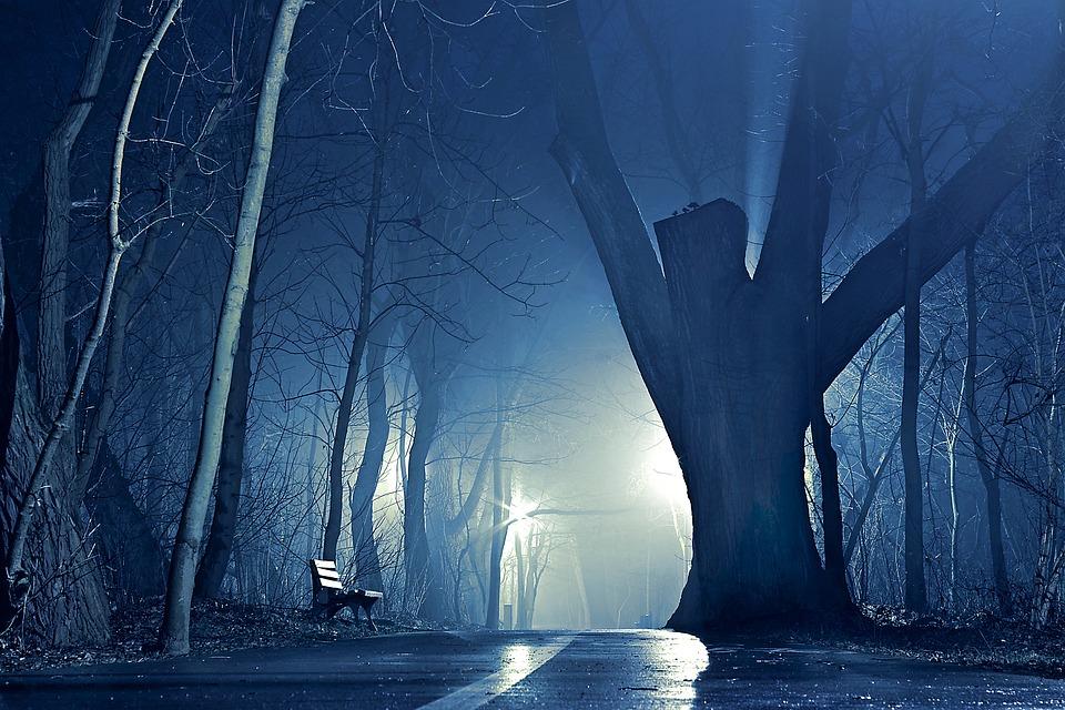 Night, Park, The Fog, Tree, Glow, Giant, The Path