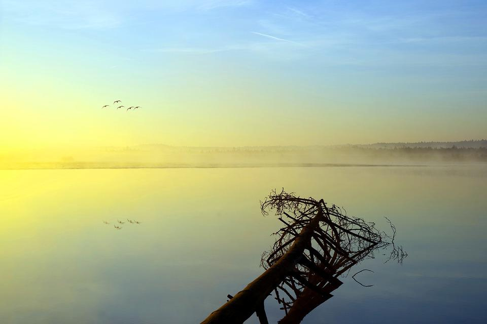 The Fog, Reflection, Landscape, In The Morning, Sky