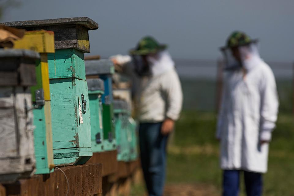 The Hive, Bee, Honey, Beekeeper
