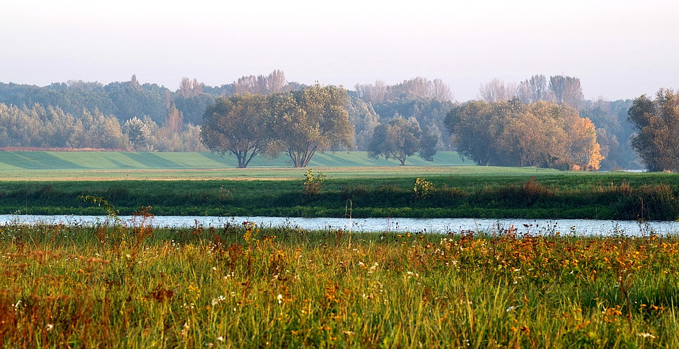 River, Meadows, Water, Forest, Grass, Tree, The Horizon