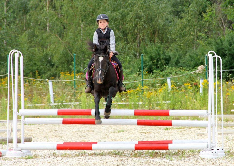 The Horse, Fun, For Children, Konik