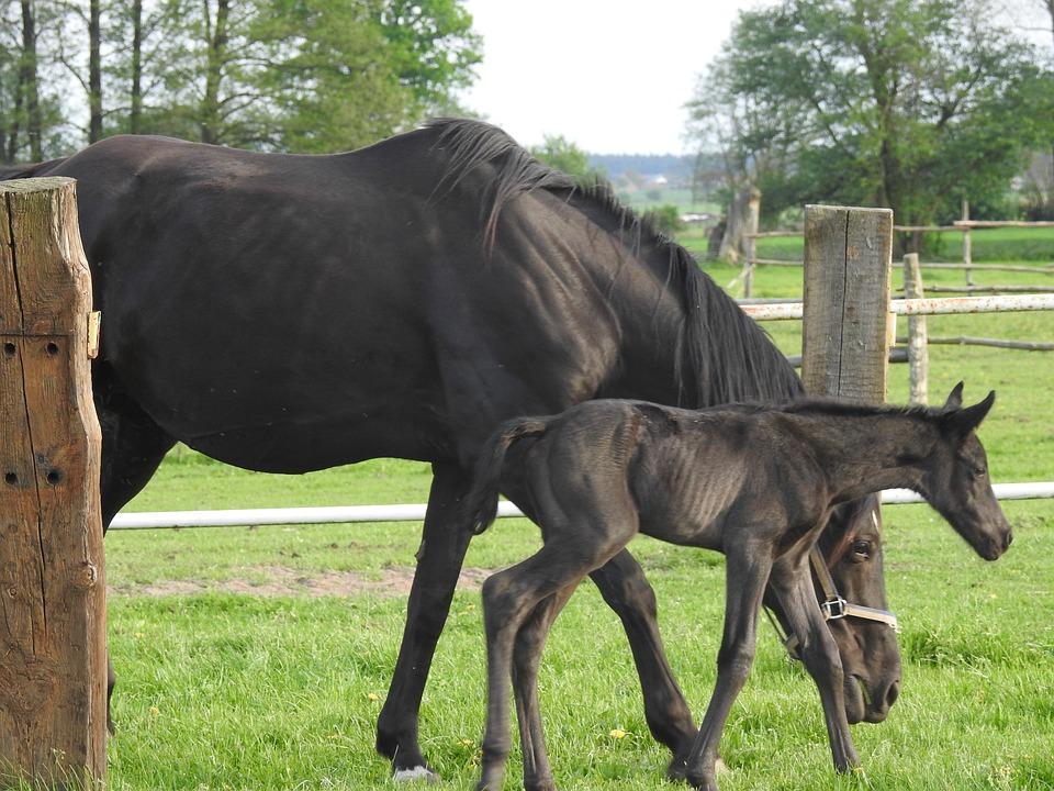 Mammals, Animals, Farm, Lawn, The Horse, Pasture Land