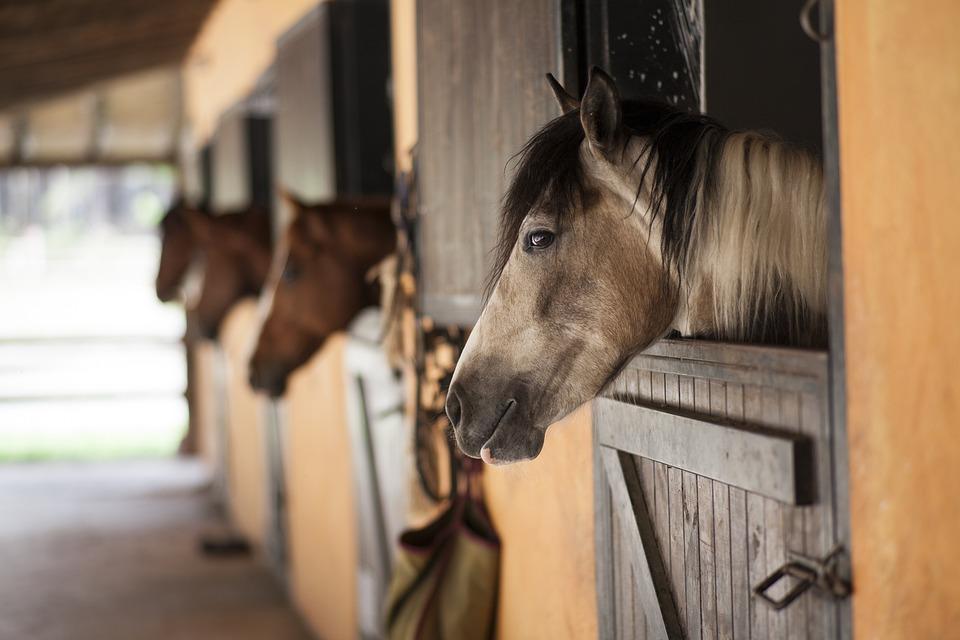 Horse, Barn, The Horses Are, Stallion, Animal, Cute