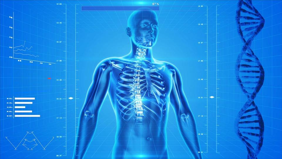Free Photo The Human Body X Ray Anatomy People Human Skeleton Max