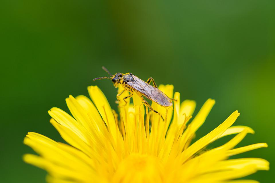 Macro, The Insect, Nature, Animals, Macro Photography