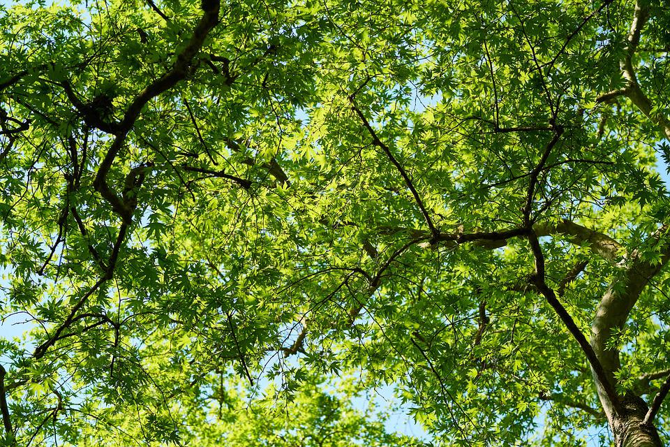 Green, Tree, Branch, Spring, The Leaves Are, Leaves