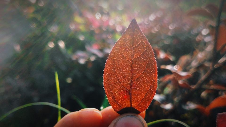 Defoliation, The Leaves, Leaf, Sunshine
