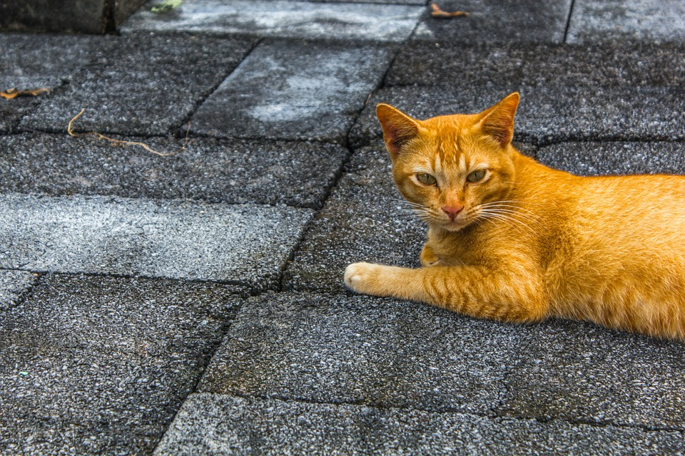 Cat, Pets, The Little Animals, Animals, The Orange Cat
