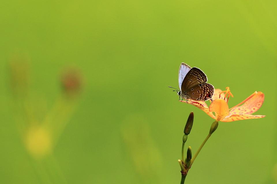 Butterfly, Flowers, The Outskirts