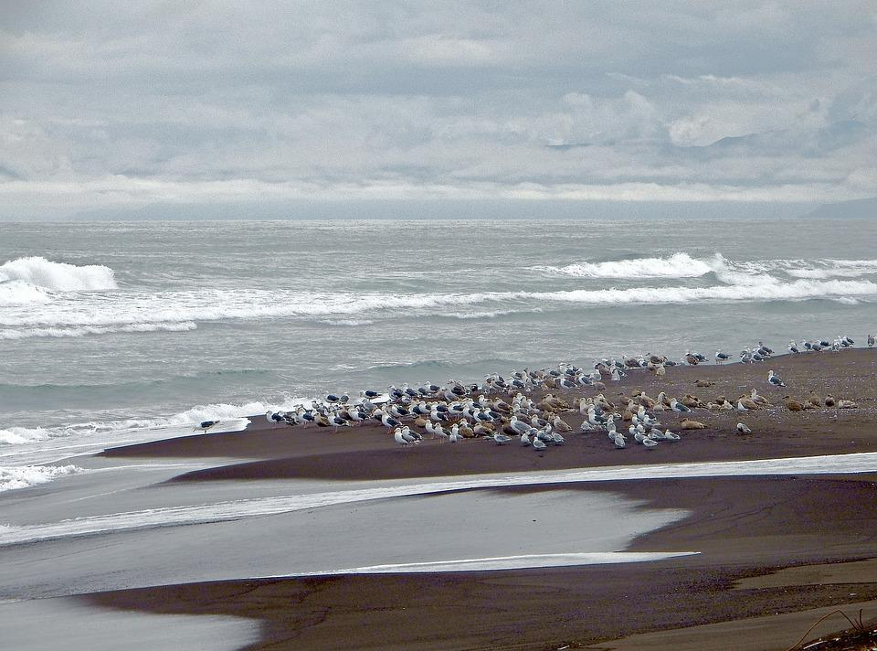 The Pacific Ocean, Wave, Beach, Evening, Gulls, Birds