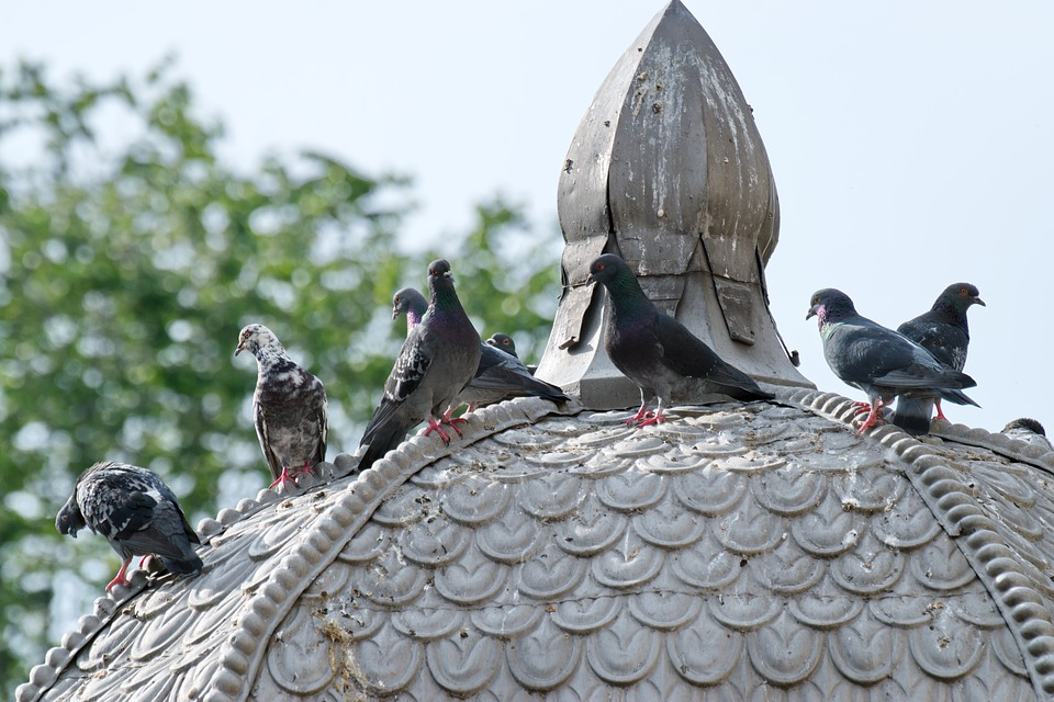 Birds, Pigeons, Sitting, Roof, The Dome, The Pagoda