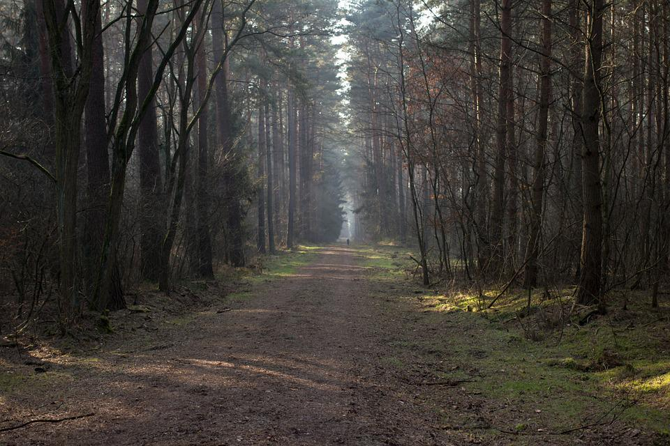 Way, Leśna, Tree, The Path, Spacer, Forest, Pine