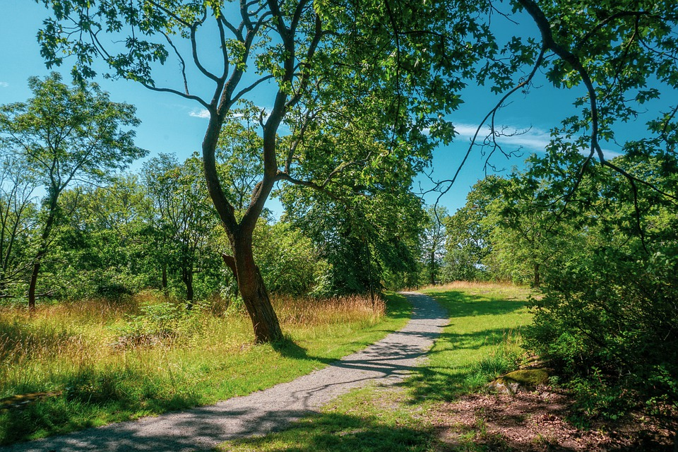 The Path, Way, Forest, Meadow, Landscape, Road, Nature