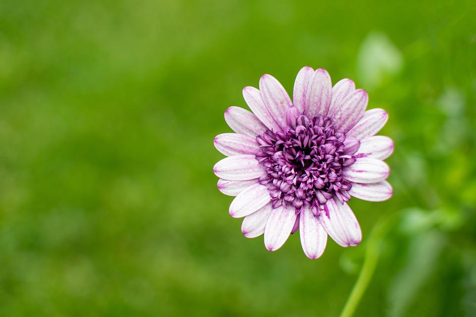 Flower, The Petals, Blooms, Nature, Plant, Spring