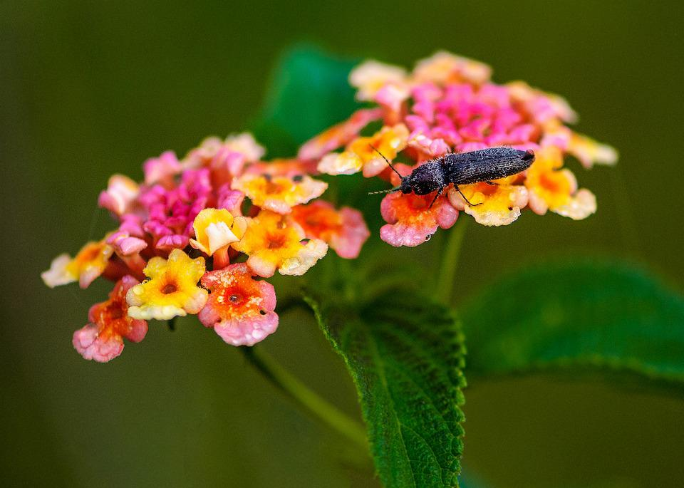 Insects, Wildflowers, The Pollen, Nice Picture