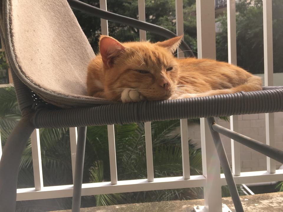 Cat, The Pussy Cat, Cat Sleeping, The Cat Lay Down, Pet