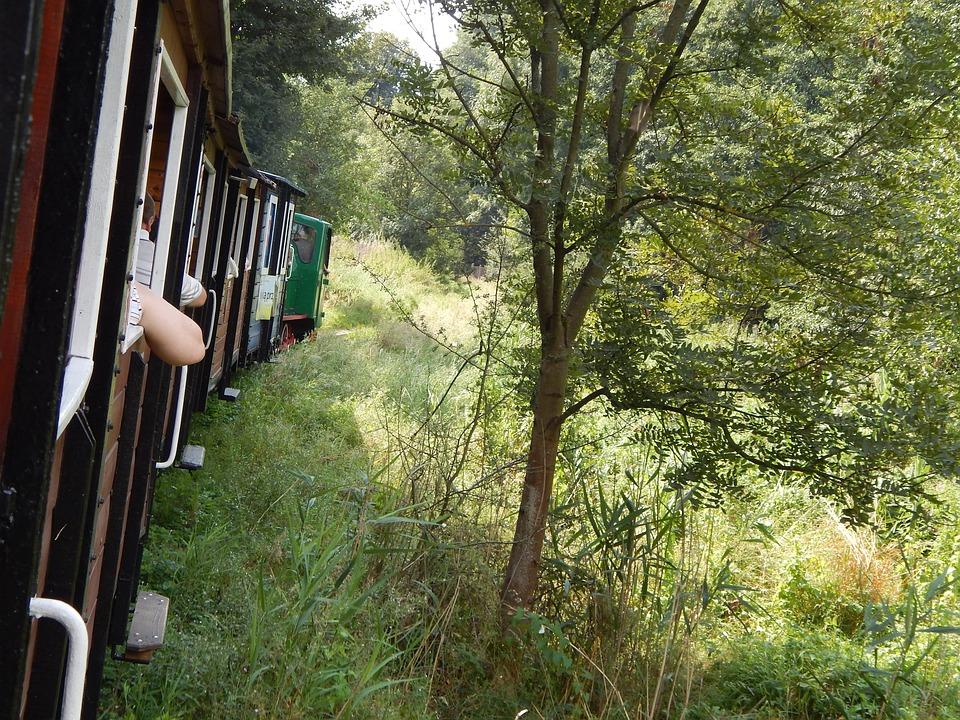 Train, The Queue, Horse, View
