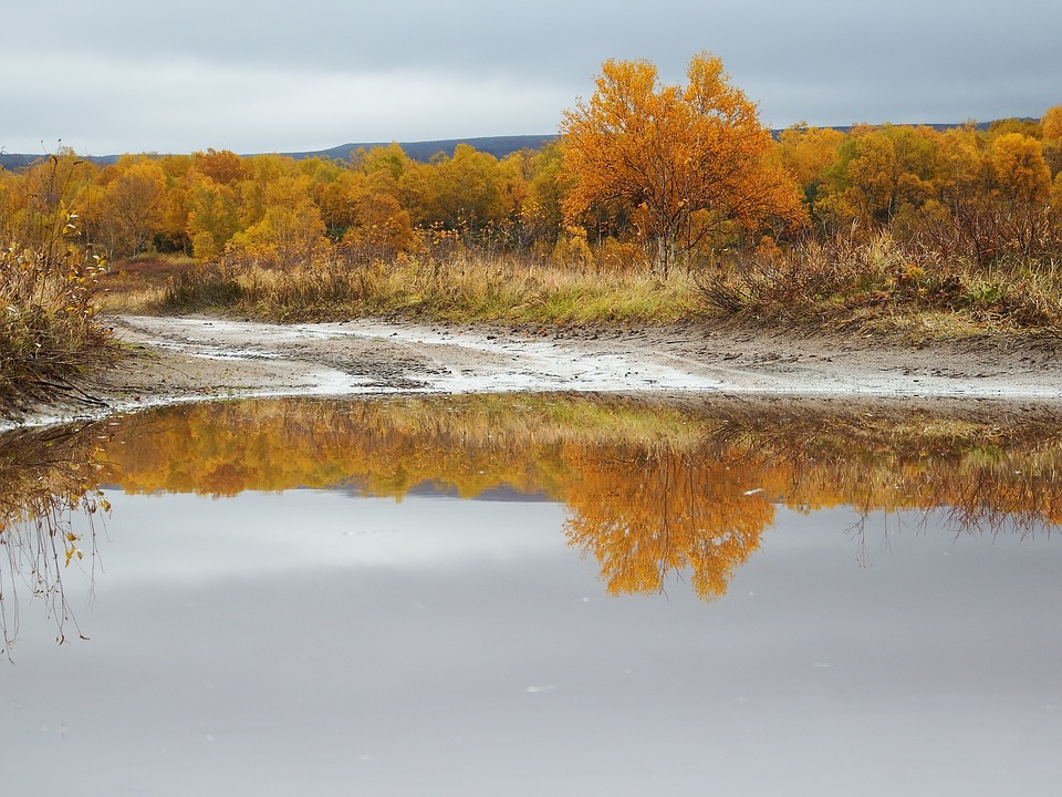 Autumn, Puddles, Reflection, The Roads, Leaves, Rain