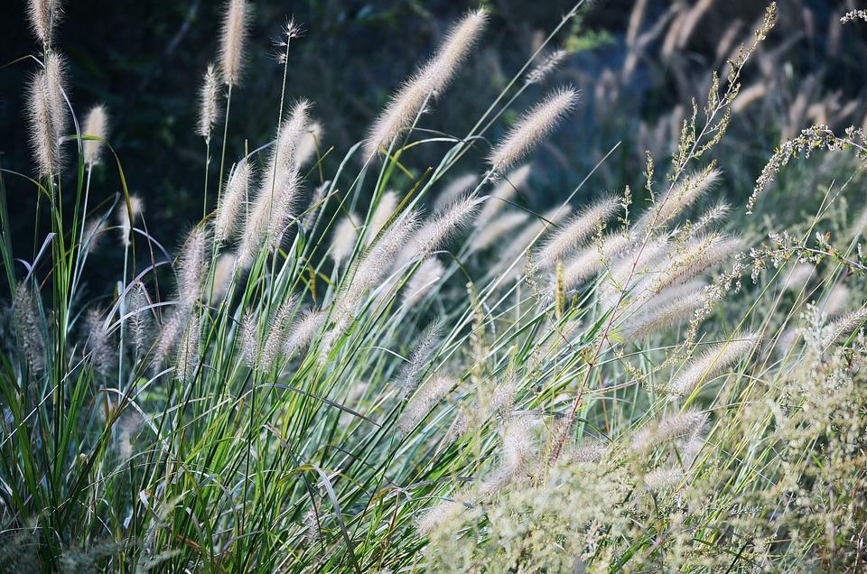The Scenery, Plant, Artistic Conception