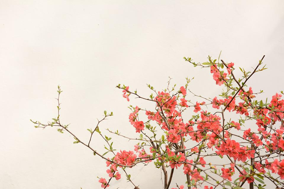 Flower, The Scenery, Plant