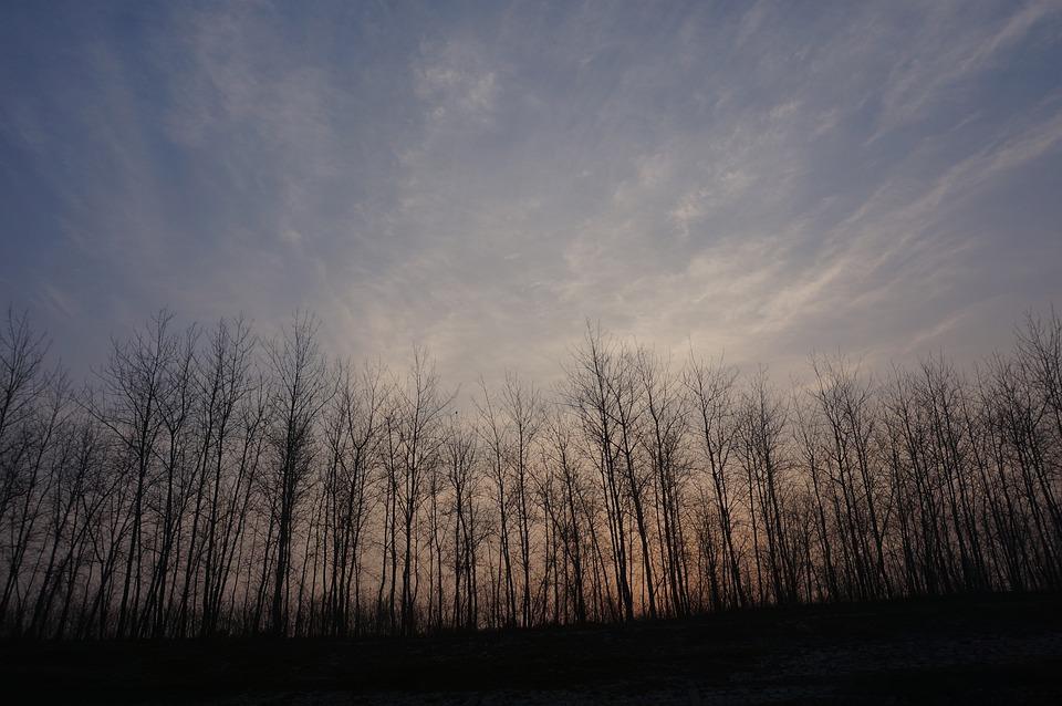 Scenery, Woods, Morning, Sky, The Scenery