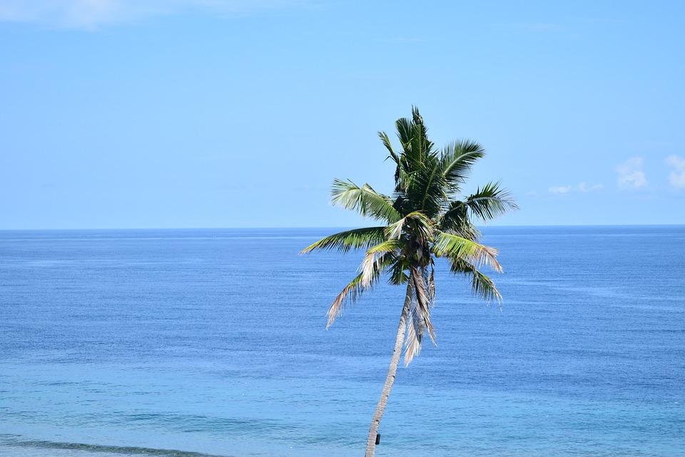 The Sea, Coconut Trees, Blue Sky
