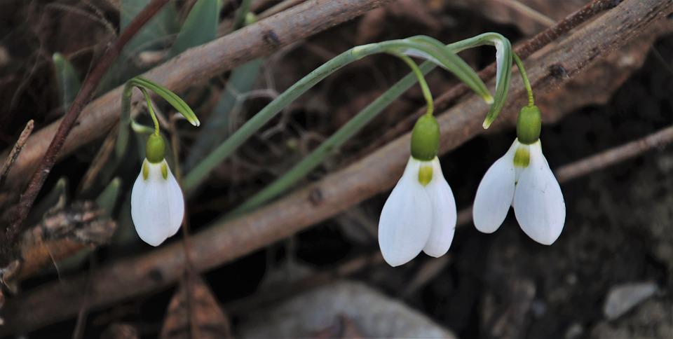 In The Garden, Signs Of Spring, The Smell Of