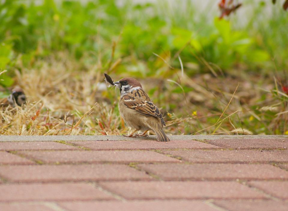 The Sparrow, Mazurka, Pen, Clerk, Walkway, Grass
