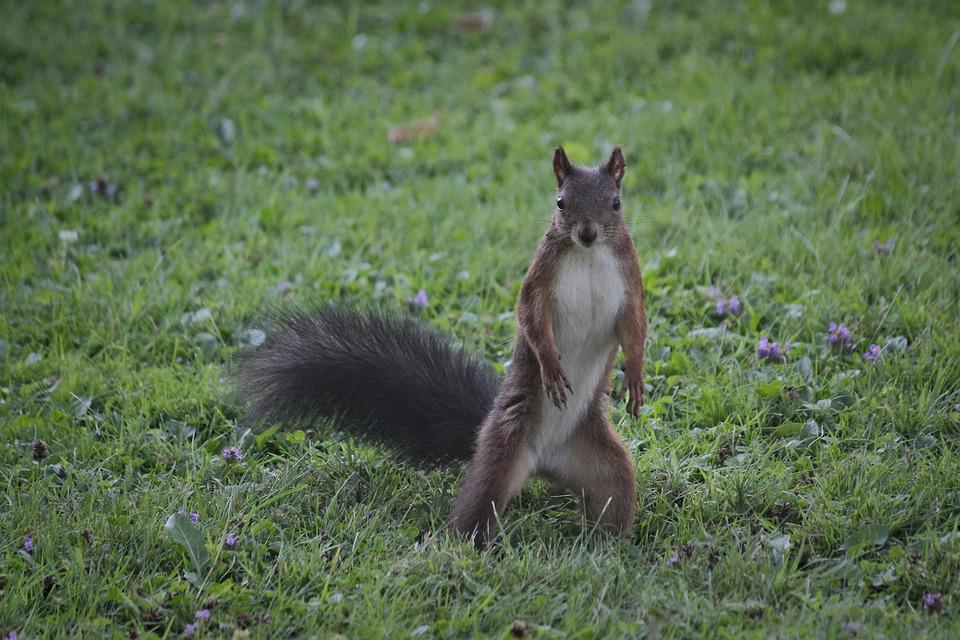 The Squirrel, Surprised, Standing, Curious, Rodent