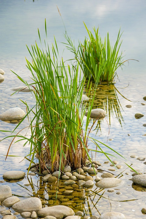Grass, Water, Plant, Nature, Green, The Stones
