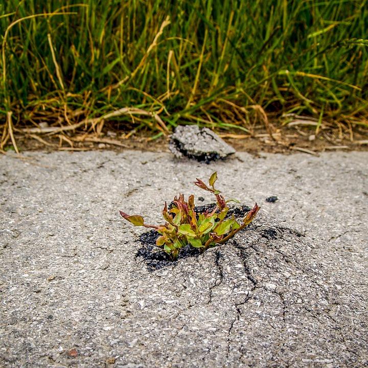 Plant, The Strength Of The, Asphalt, Concrete, Nature
