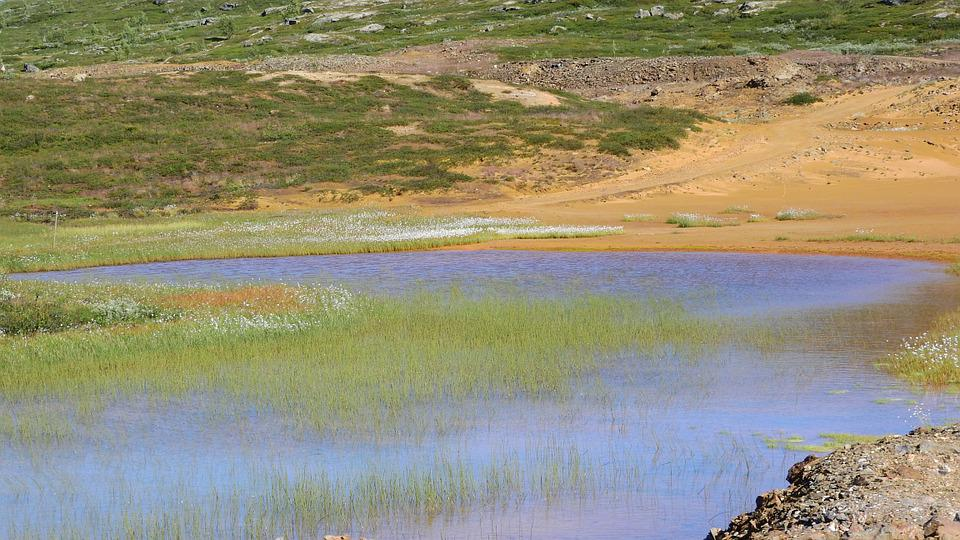 The Tailings Impoundment, Eriophorum, Shallow Water