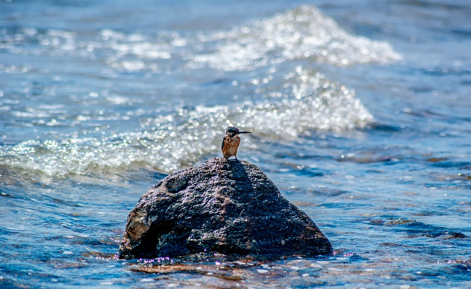 Sea, Bird, Nature, The Waves, Summer, Water, Stone