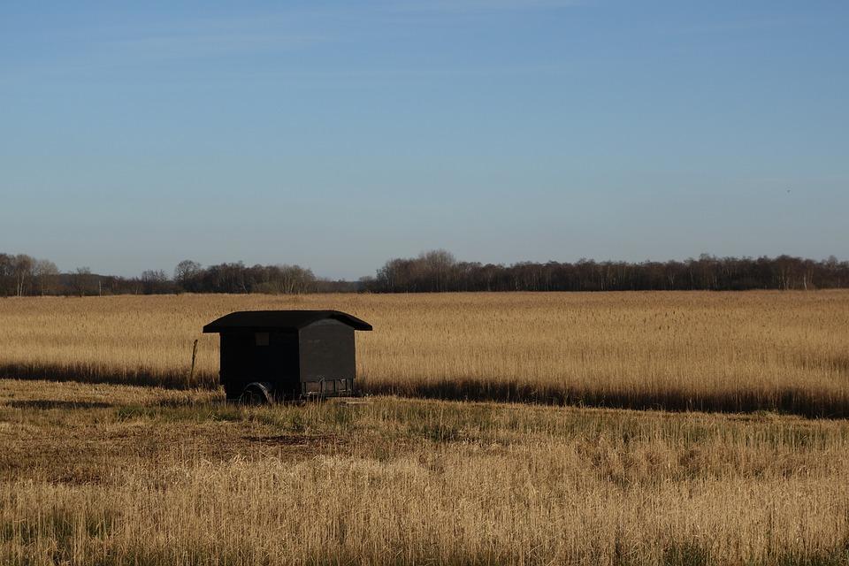 Landscape, The Wieden, The Weerribben, Reed