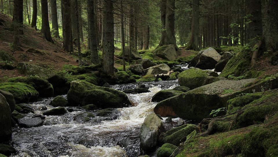 Forest, Stream, šumava, The Wildness, Emotion, Stony