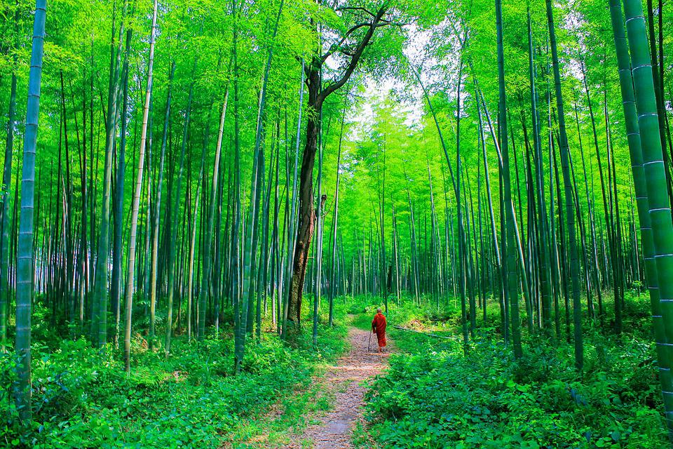 Theravada Buddhism, Monk At Bamboo Forest