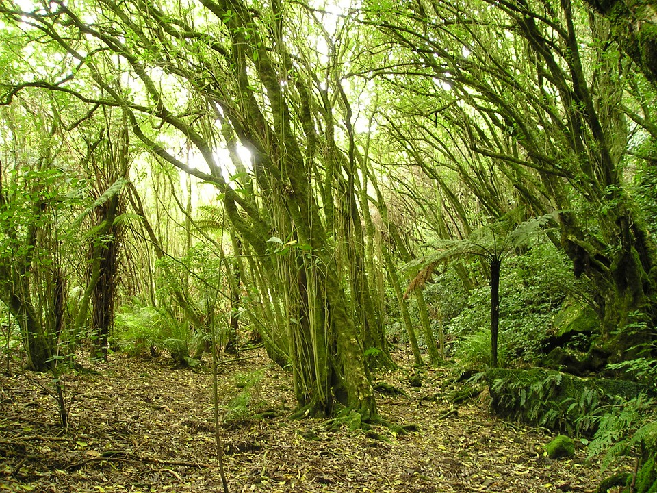 New Zealand, Nature, Trees, Forest, Thicket, Green