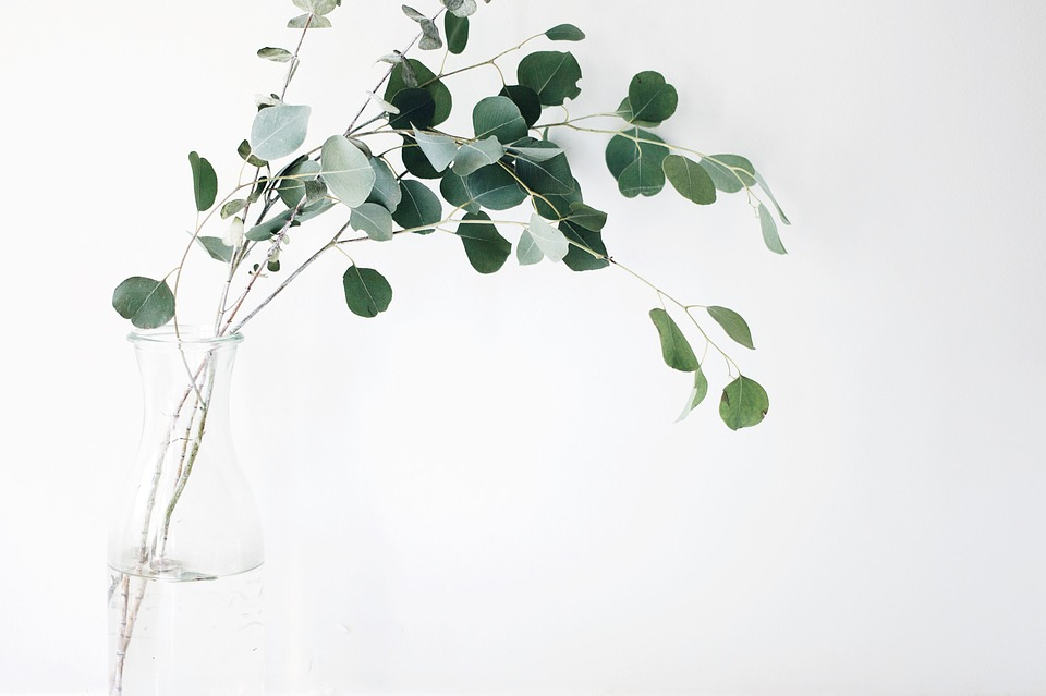Free Photo Things Leaves Still Items Vase Plants Branches Max Pixel