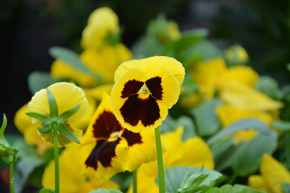Flower, Thinking, Yellow, Green, Nature, Garden
