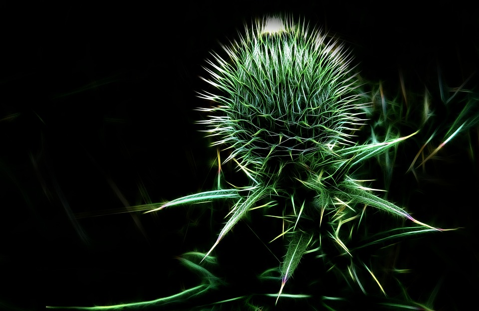 Fractalius, Thistle, Plant, Prickly, Arable Thistle