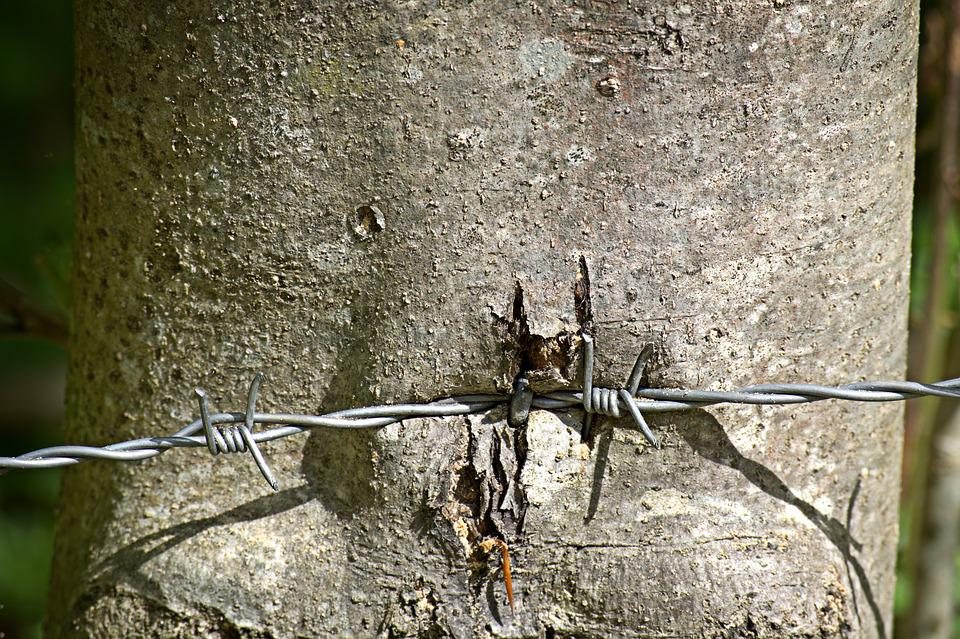 Barbed Wire, Wire, Metal, Thorn, Wiring, Close, Pointed